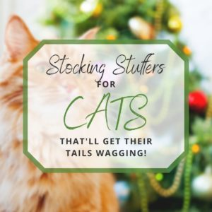 Stocking Stuffers for Cats