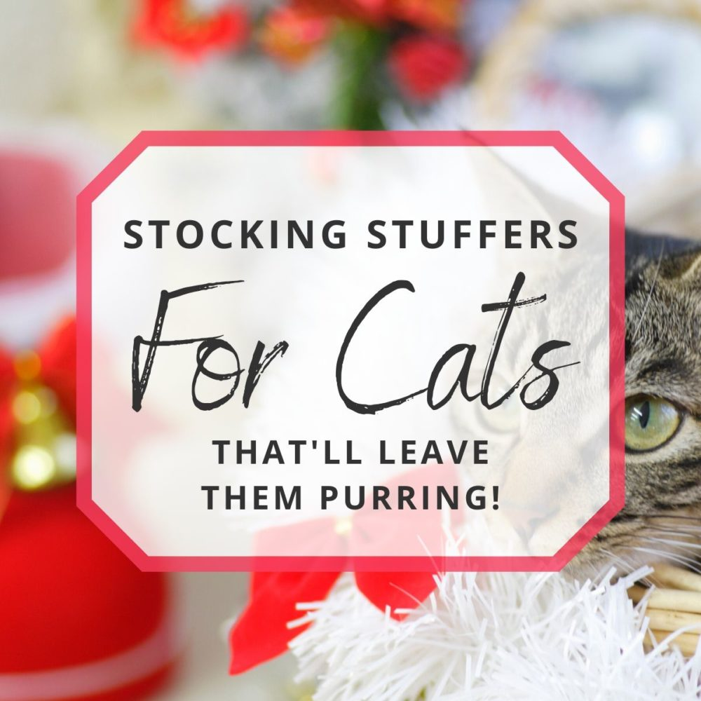 10 Purr-fect Stocking Stuffers for Cats