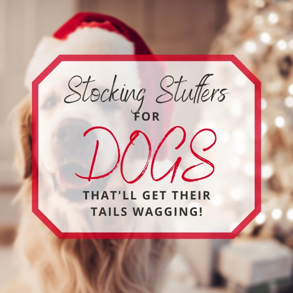 10 Stocking Stuffers for Dogs That'll Get Their Tails Wagging